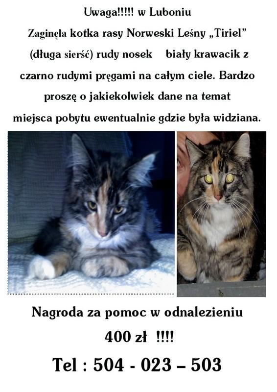 Tiriel Wieśći L 2.jpg